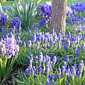 Beautiful Spring Day by Carol Groenen