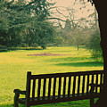 Bench Under A Tree by Jasna Buncic