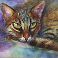 Bengal Cat Watercolor Art Painting by Svetlana Novikova