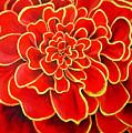 Big Red Flower by Geoff Greene