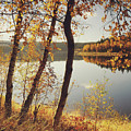 Birch Trees And Reflected Autumn Colors by Stefan Mendelsohn