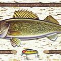 Birch Walleye by JQ Licensing