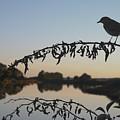 Bird Song At Last Light by Dave Gordon