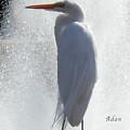 Birds And Fun At Butler Park Austin - Birds 2 Macro by Felipe Adan Lerma