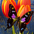Black And Pink Butterfly by Garry Gay