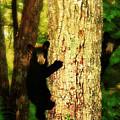Black Bear Cubs by Gray  Artus