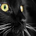 Black Cat 2 by Craig Incardone
