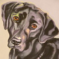 Black Lab Aint No Cure For Love by Susan A Becker