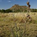 Black Mesa Cacti by Charles Warren