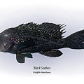 Black Seabass by Ralph Martens