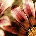 Blanket Flowers by Bonnie Bruno