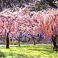 Blossom Fantasy by David Lloyd Glover