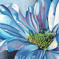 Blue by Angela Armano