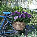 Blue Bike by Cheri Randolph