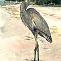 Blue Heron On Shell Beach by Shawn McLoughlin
