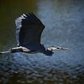 Blue Heron Skies  by Saija  Lehtonen