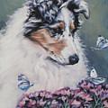 Blue Merle Collie Pup by Lee Ann Shepard