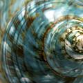 Blue Seashell by Fabrizio Troiani