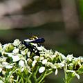 Blue Wasp 2 by Douglas Barnett
