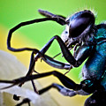 Blue Wasp On Fruit by Ryan Kelly