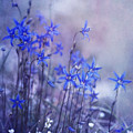 Bluebell Heaven by Priska Wettstein