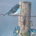 Bluebird by John Wise