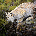 Bobcat by Mary Ann Cherry