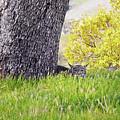 Bobcat Watch by Karen  W Meyer