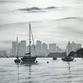 Boston Skyline  by Matthew Martelli