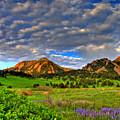 Boulder Spring Wildflowers by Scott Mahon