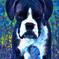 Boxer 20130126v5 by Wingsdomain Art and Photography