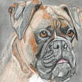 Boxer by Don  Gallacher