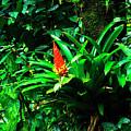 Bromeliads El Yunque  by Thomas R Fletcher