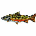 Brook Trout by Jim  Romeo