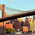 Brooklyn by Mitch Cat