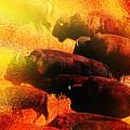 Buffalo Sun by Terril Heilman
