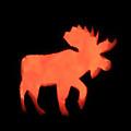 Bull Moose Pumpkin by Lloyd Alexander