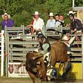 Bull Rider by Phyllis Britton