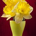 Bunch Of Daffodils by Garry Gay