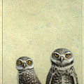 Burrowing Owls by James W Johnson