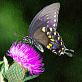 Butterfly And Thistle by Jeff Kolker