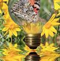 Butterfly In A Bulb II by Shane Bechler