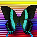 Butterfly On Colored Pencils by Garry Gay