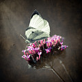 Butterfly Spirit #02 by Loriental Photography