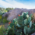 Cactus And Granite    9234 by Fritz Ozuna