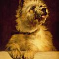 Cairn Terrier   by George Earl