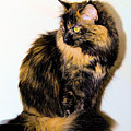 Calico Cats by Cheryl Poland