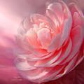 Camellia by Carol Cavalaris