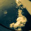 Canvas Seagulls by Bob Orsillo