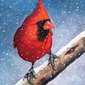 Cardinal In Winter by Joyce Geleynse